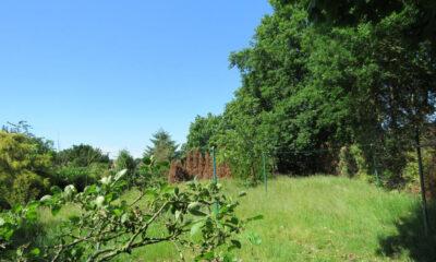 Garten (Einfamilienhaus, Westoverledingen-Steenfelde)